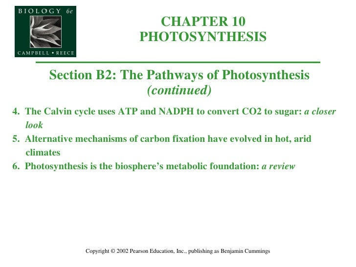 CHAPTER 10 PHOTOSYNTHESIS Copyright © 2002 Pearson Education, Inc., publishing as Benjamin Cummings Section B2: The Pathwa...