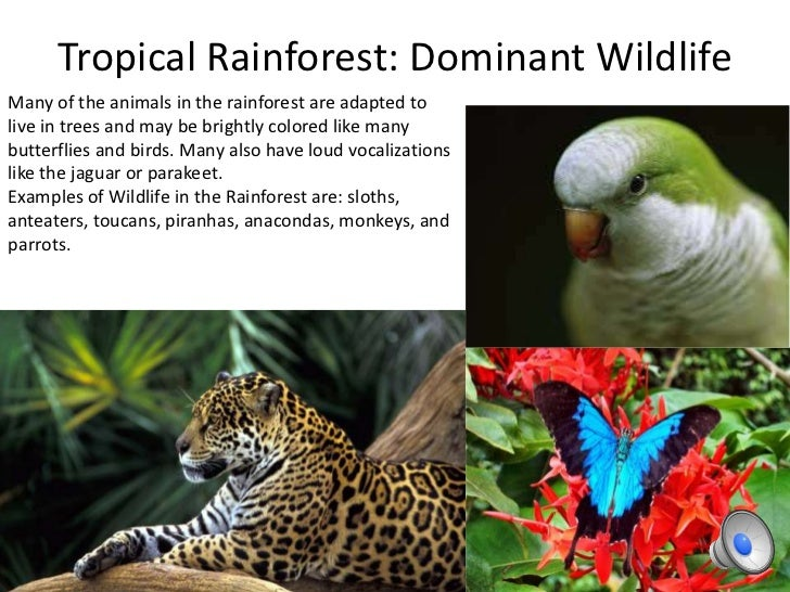 Rainforest Plants  Blue Planet Biomes