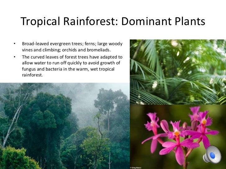 Tropical rainforest plants and animals information
