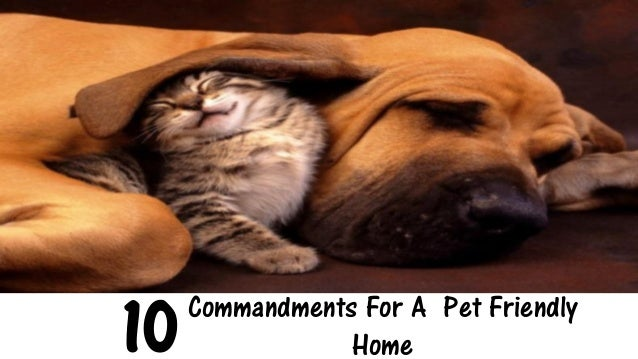 10 Commandments To Follow For A Pet Friendly Home