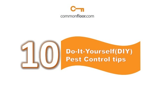 10 Do-it-Yourself (DIY) pest control tips for a pest free home