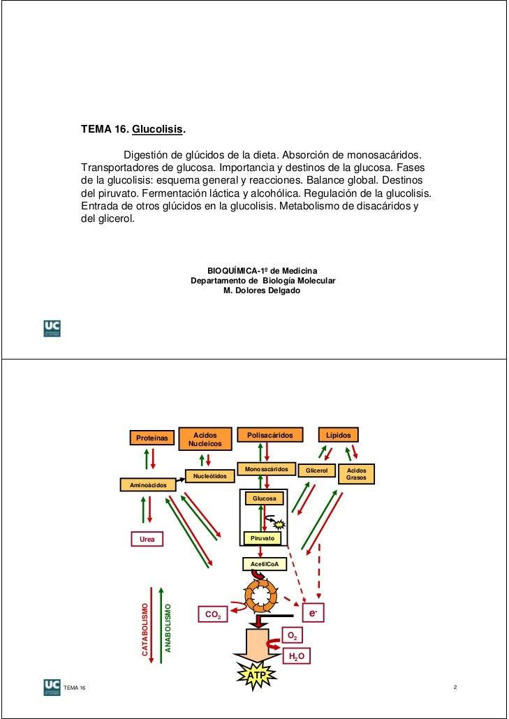 TEMA 16. Glucolisis.               Digestión de glúcidos de la dieta. Absorción de monosacáridos.     Transportadores de g...