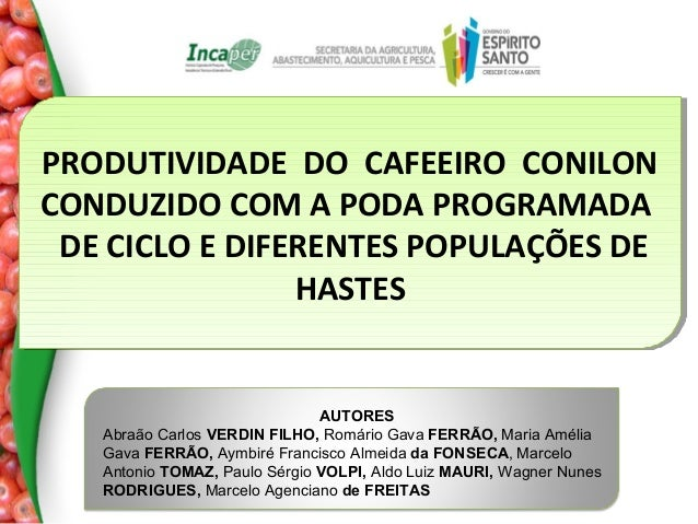 PRODUTIVIDADE DO CAFEEIRO CONILON PRODUTIVIDADE DO CAFEEIRO CONILON CONDUZIDO COM A PODA PROGRAMADA CONDUZIDO COM A PODA P...