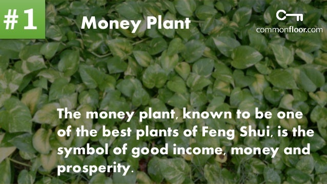 10 important feng shui plants to attract money and - Plants for good feng shui ...