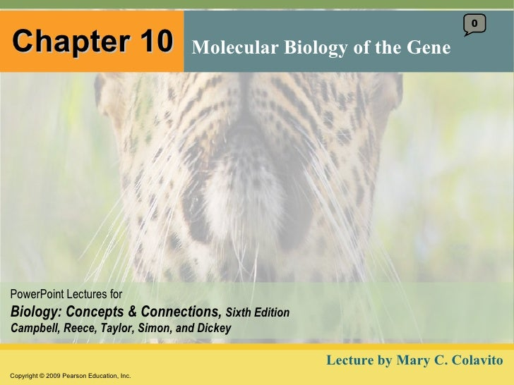Chapter 10 Molecular Biology of the Gene 0 Lecture by Mary C. Colavito