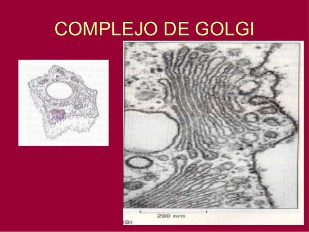 Biología - Aparato de Golgi