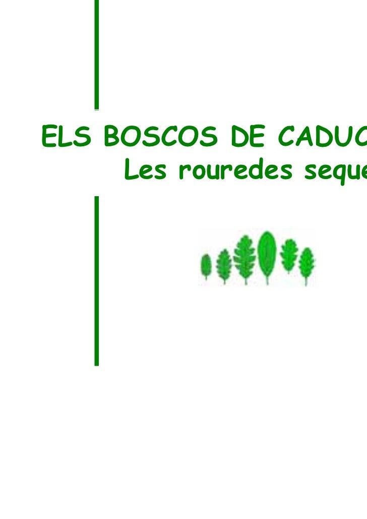 ELS BOSCOS DE CADUCIFOLIS     Les rouredes seques