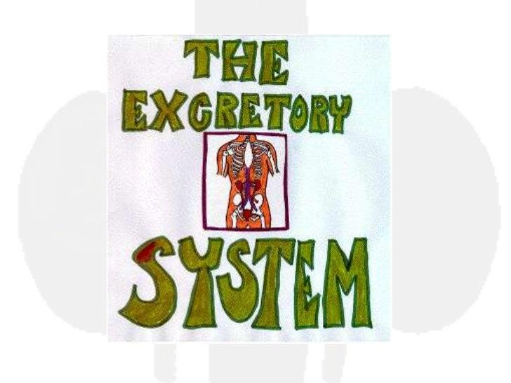 10th excretory system