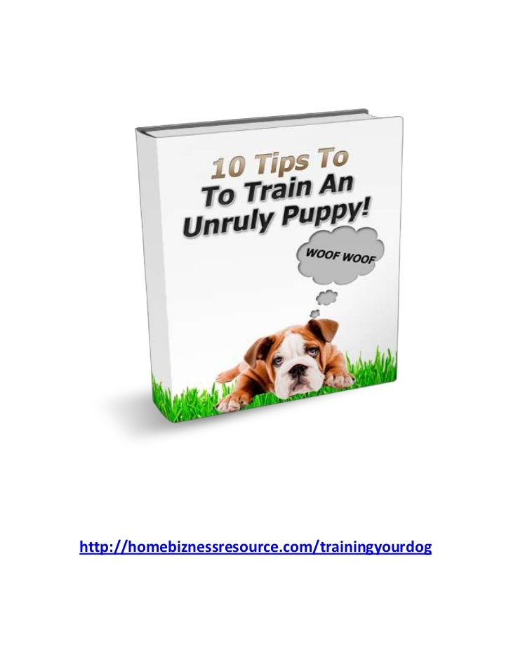 10 Tips To Train An Unruly Puppy