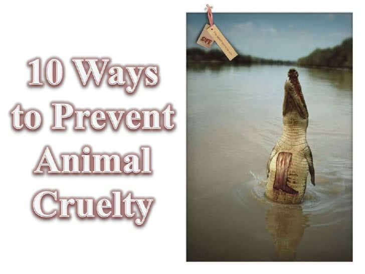 animal abuse persuasive essay Persuasive essay on animal cruelty - fast and trustworthy services from industry best agency proofreading and editing aid from best professionals let us take care of your master thesis.