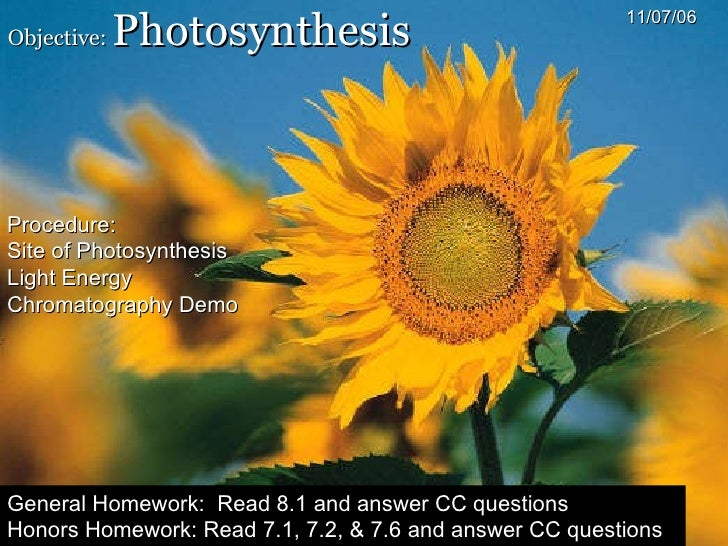 Objective:  Photosynthesis 11/07/06 Procedure: Site of Photosynthesis Light Energy Chromatography Demo General Homework:  ...