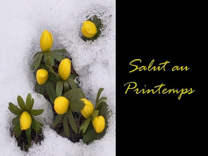 11 12-06 -salut_au_printemps_____