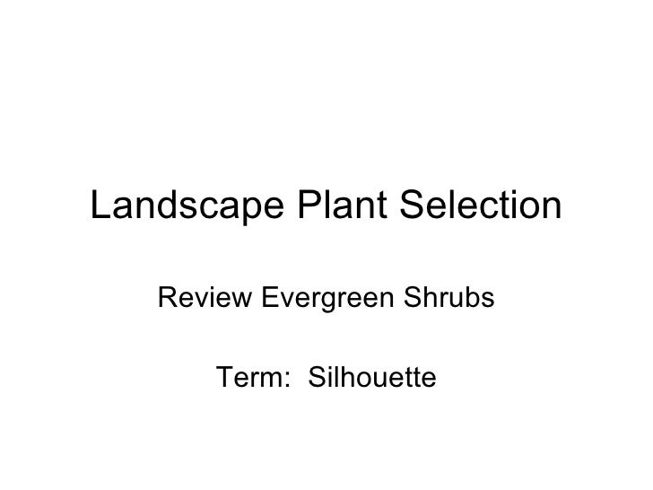 Landscape Plant Selection Review Evergreen Shrubs Term:  Silhouette