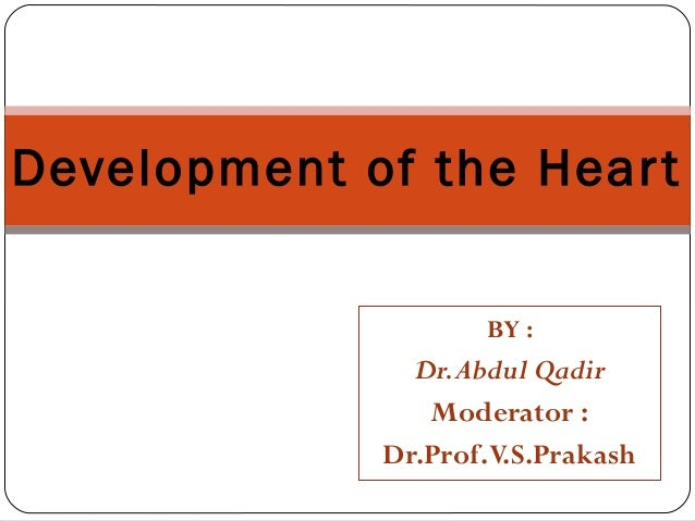 11   development of the heart