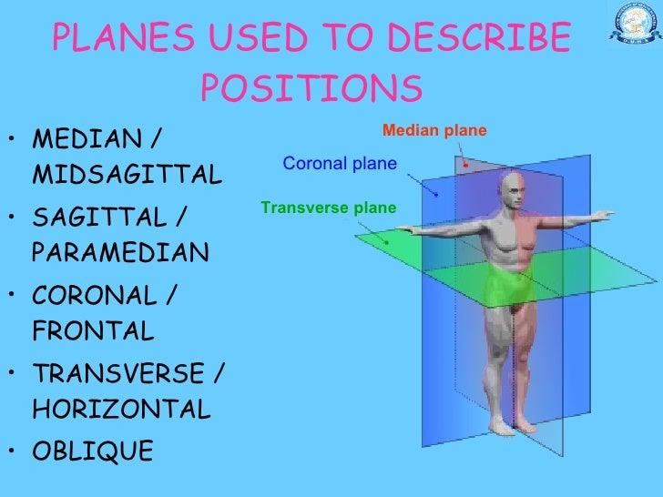 Oblique plane anatomy