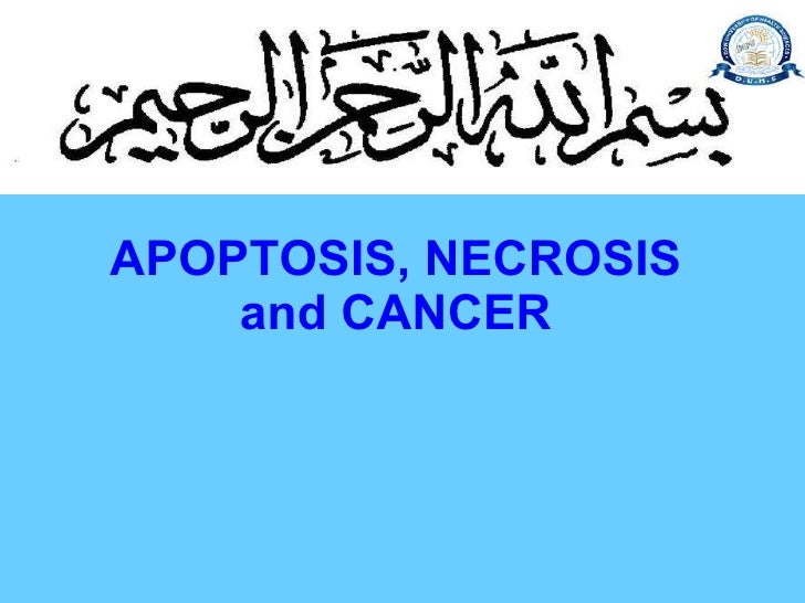 11.20 (dr. yasmeen hashim) apoptosis (mechanism in normal tissues. programmed cell death) necrosis cancer cell growth