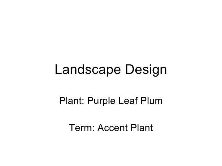 Landscape Design Plant: Purple Leaf Plum Term: Accent Plant