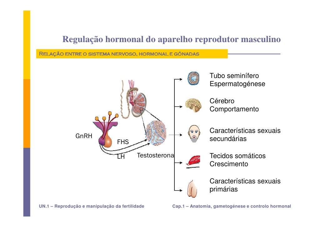 hormonios gonadotroficos e esteroides