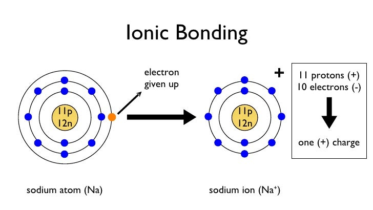 proton and neutron diagram