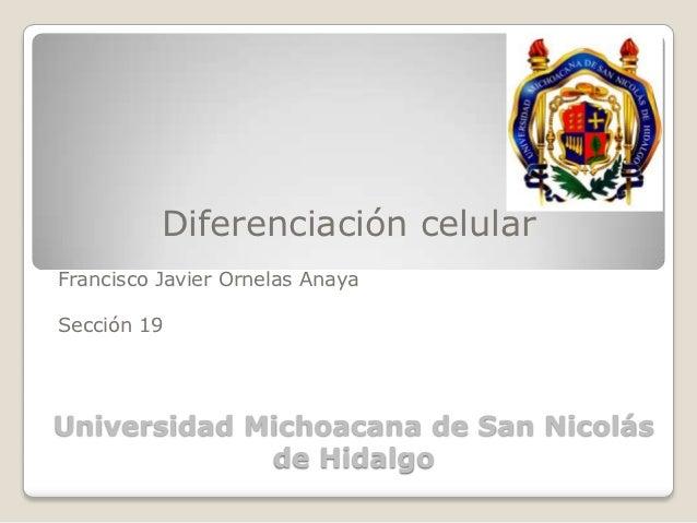 Diferenciación celularFrancisco Javier Ornelas AnayaSección 19Universidad Michoacana de San Nicolás             de Hidalgo