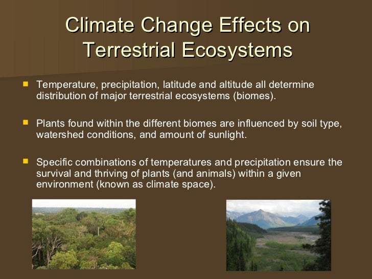 11   effects on terrestrial systems
