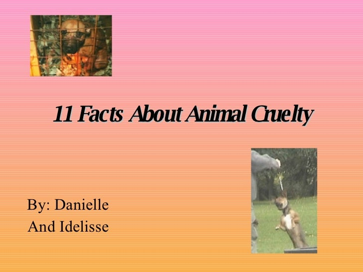 11 Facts About Animal Cruelty By: Danielle And Idelisse