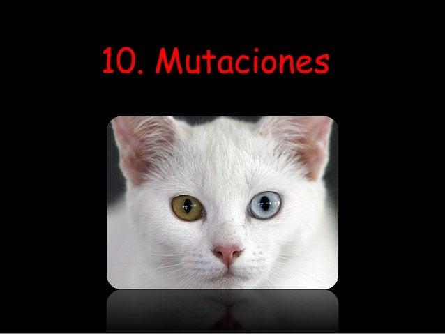 10. Mutaciones