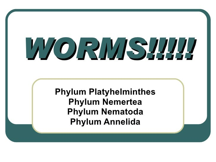 11. Worm Phyla Notes