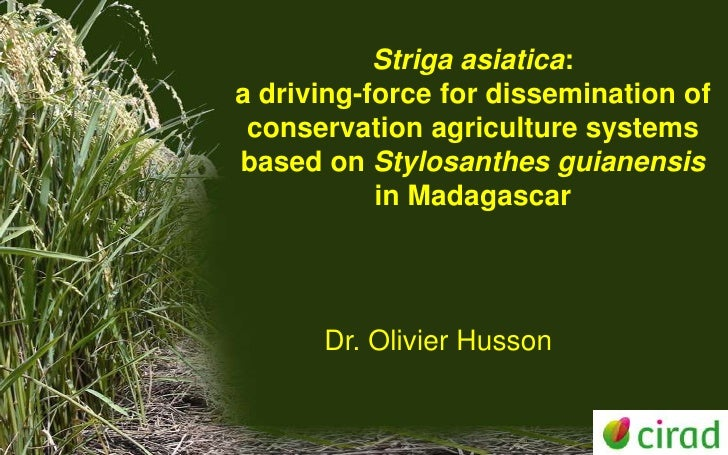 Striga asiatica: a driving-force for dissemination of CA systems based on Stylosanthes guianensis in Madagascar. Olivier Husson