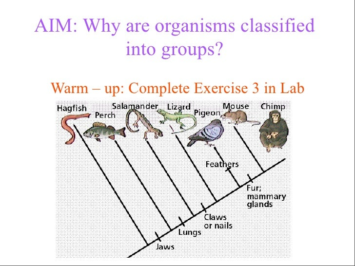 1.14 Why are organisms classified into groups ?