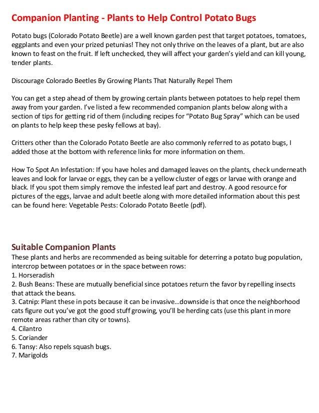 Companion Planting - Plants to Help Control Potato Bugs