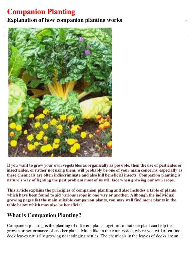 Companion PlantingExplanation of how companion planting worksIf you want to grow your own vegetables as organically as pos...