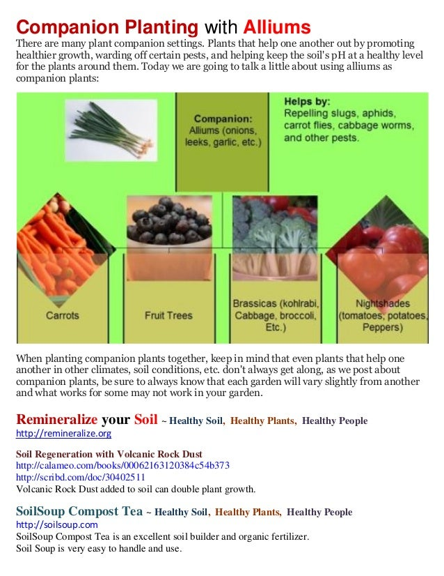 Companion Planting with AlliumsThere are many plant companion settings. Plants that help one another out by promotinghealt...