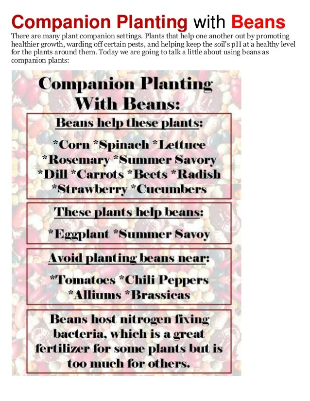 Companion Planting with Beans