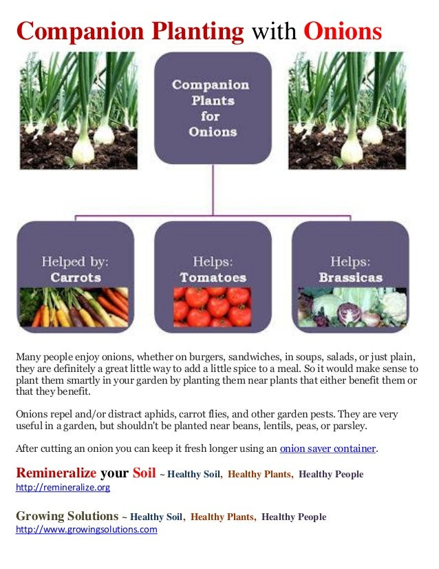 Companion Planting with OnionsMany people enjoy onions, whether on burgers, sandwiches, in soups, salads, or just plain,th...
