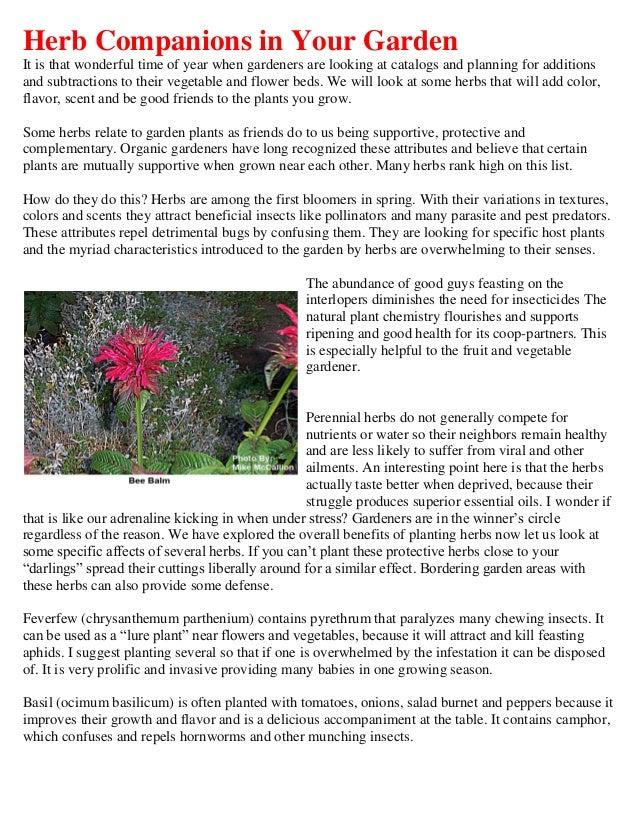 Herb Companions in Your Garden - Herb basket
