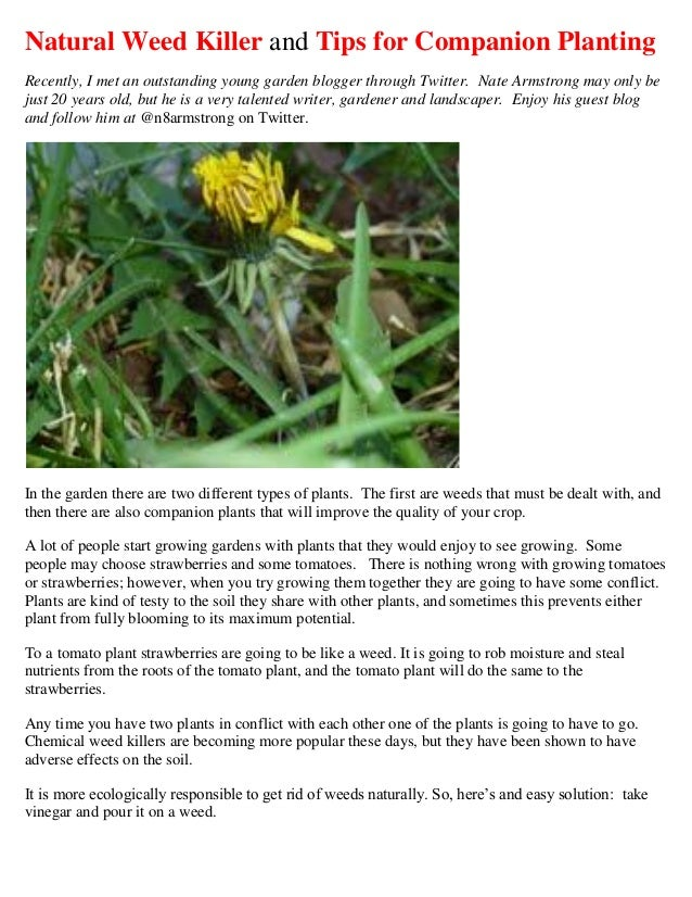 Natural Weed Killer and Tips for Companion PlantingRecently, I met an outstanding young garden blogger through Twitter. Na...