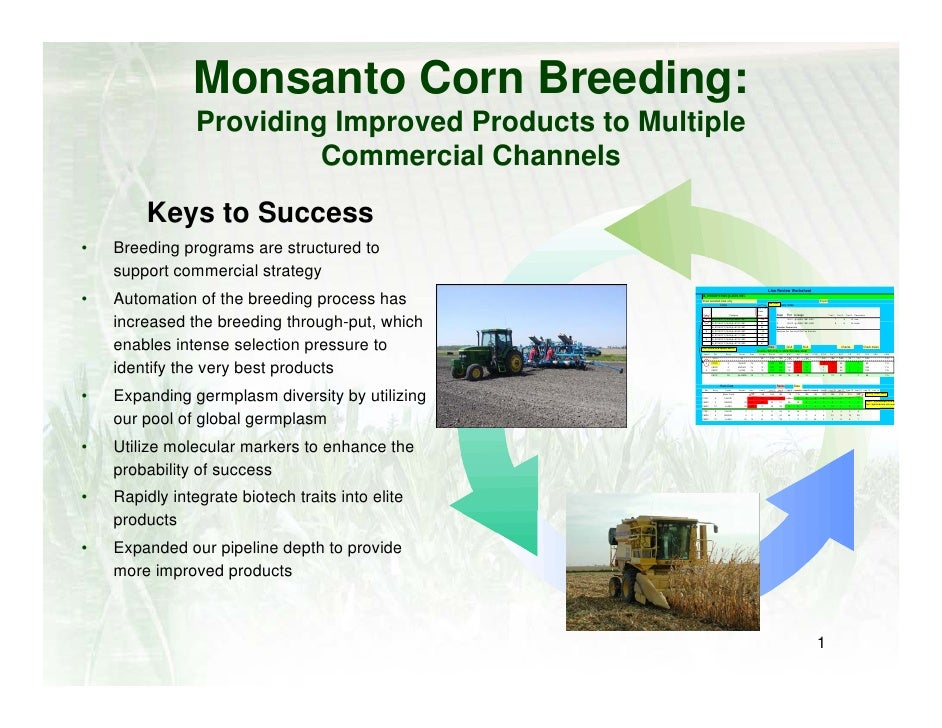Monsanto Corn Breeding:                 Providing Improved Products to Multiple                          Commercial Channe...