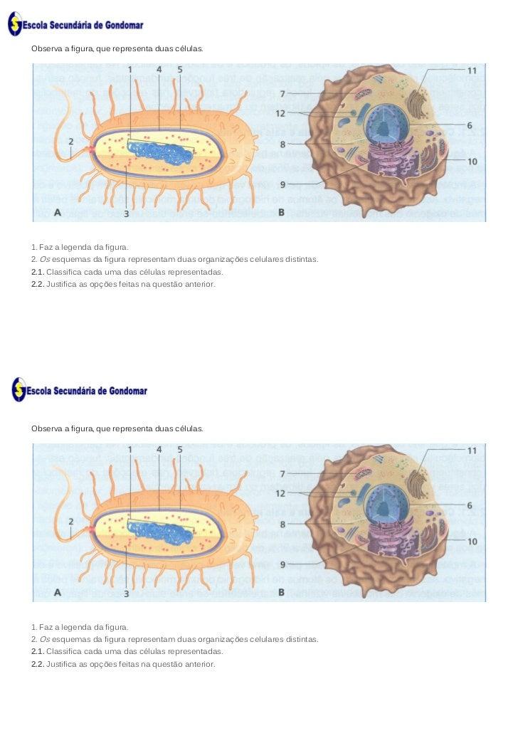Ficha de Trabalho - A célula (com soluções)