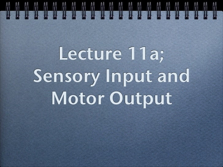 Lecture 11a;Sensory Input and  Motor Output