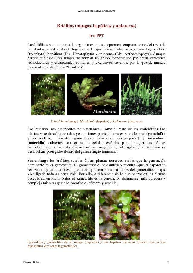 www.aulados.net Botánica 2008                      Briófitos (musgos, hepáticas y antoceros)                              ...