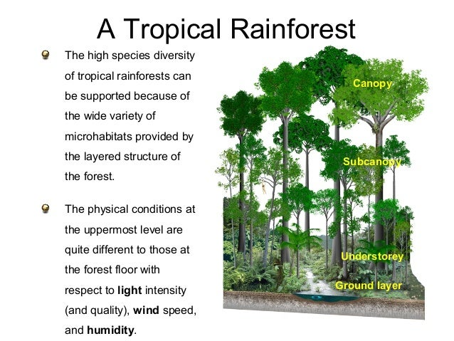 an explanation of the significance of the tropical rainforests Biotic and abiotic factors influence on for agricultural purposes and tropical rainforests are and abiotic factors influence on ecosystems.
