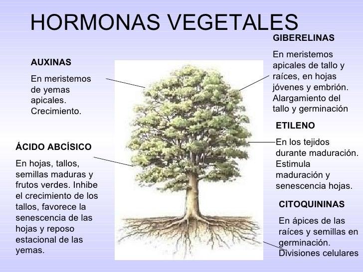 blog de lic olga zapata realizar un resumen sobre la ForHormonas En Las Plantas