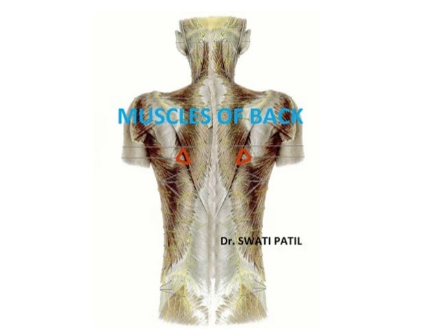 Muscles of back• Introduction• Cutaneous nerve supply• Development of muscles• Muscles of back            Introduction    ...