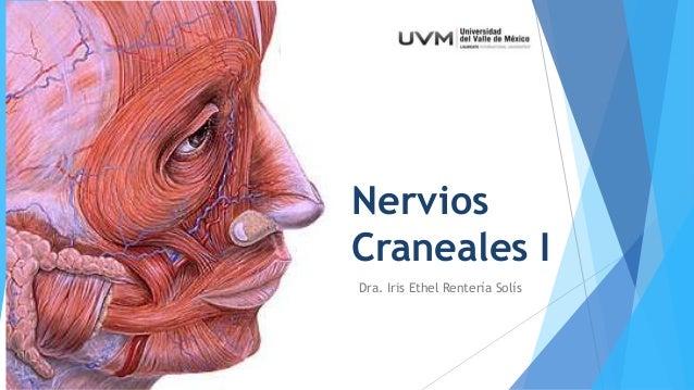 UVM Sistema Nervioso Sesion 11 Pares craneales I