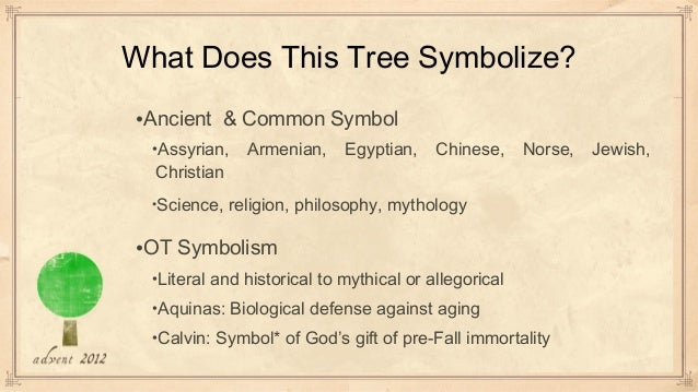 Tree of life What is the meaning of tree