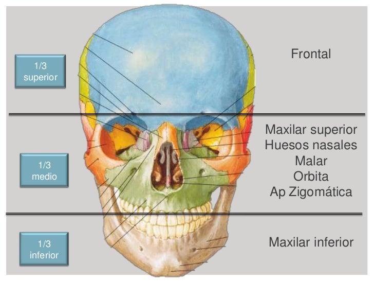 Cara: Anatomía y patologías características observables en Rx, TAC y ...