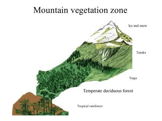 World landscapes: basic vocabulary Oasis Geography