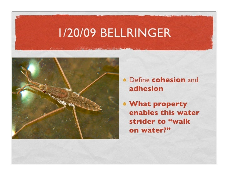 1/20/09 BELLRINGER              Define cohesion and            adhesion            What property            enables this wa...