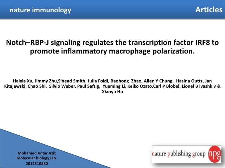 Notch–RBP-J signaling regulates the transcription factor IRF8 to promote inflammatory macrophage polarization